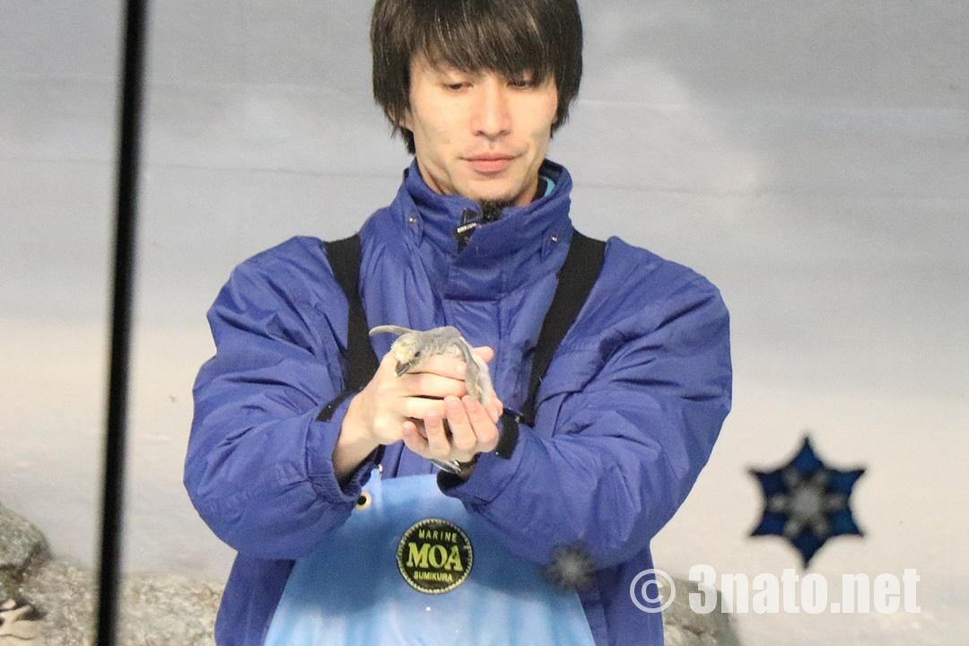 ヒゲペンギンの赤ちゃん(名古屋港水族館)撮影日:2018/12/02